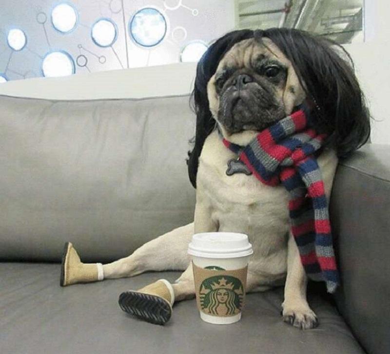 собака со стаканом кофе