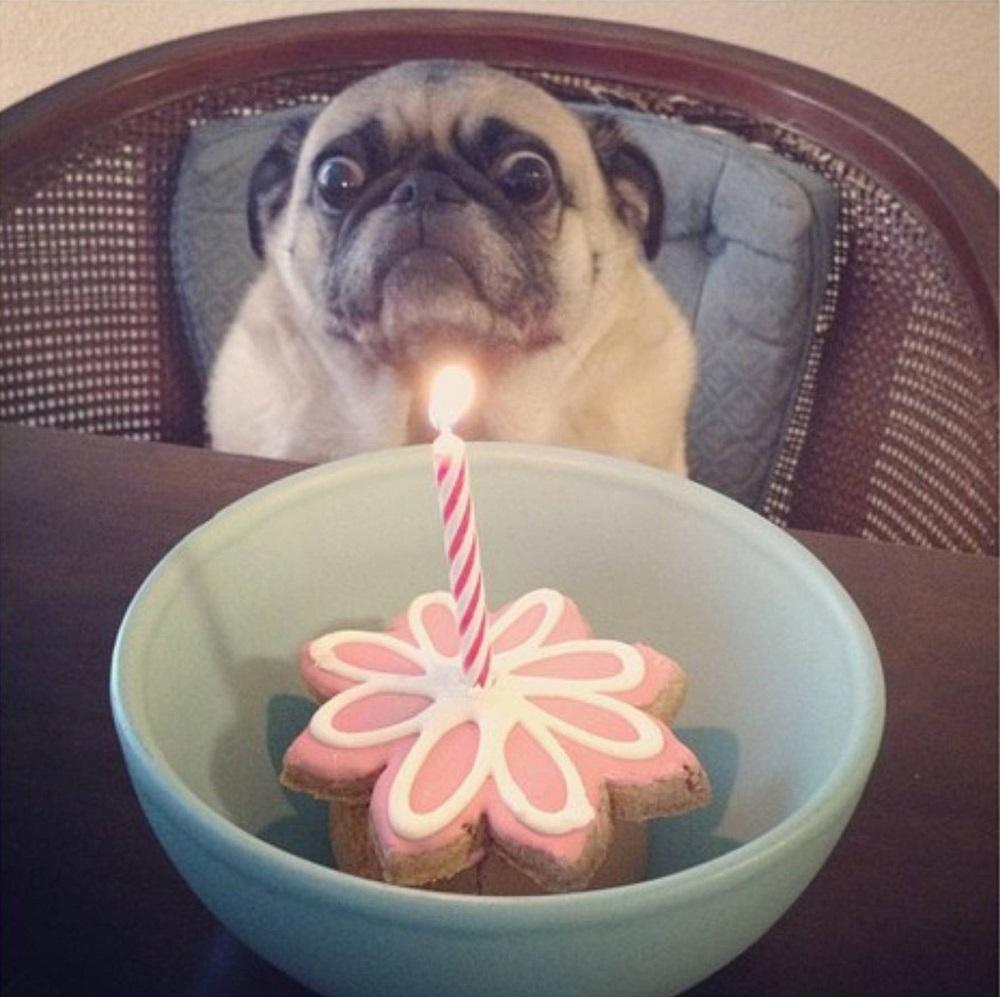 собака празднует день рождения