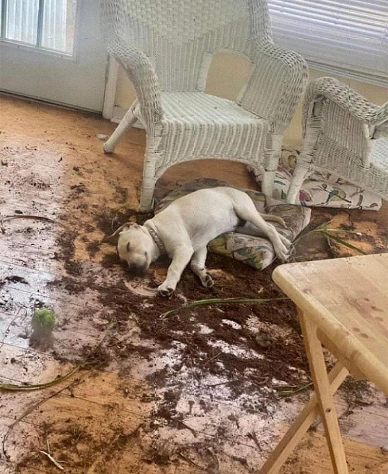 собака разбросала землю