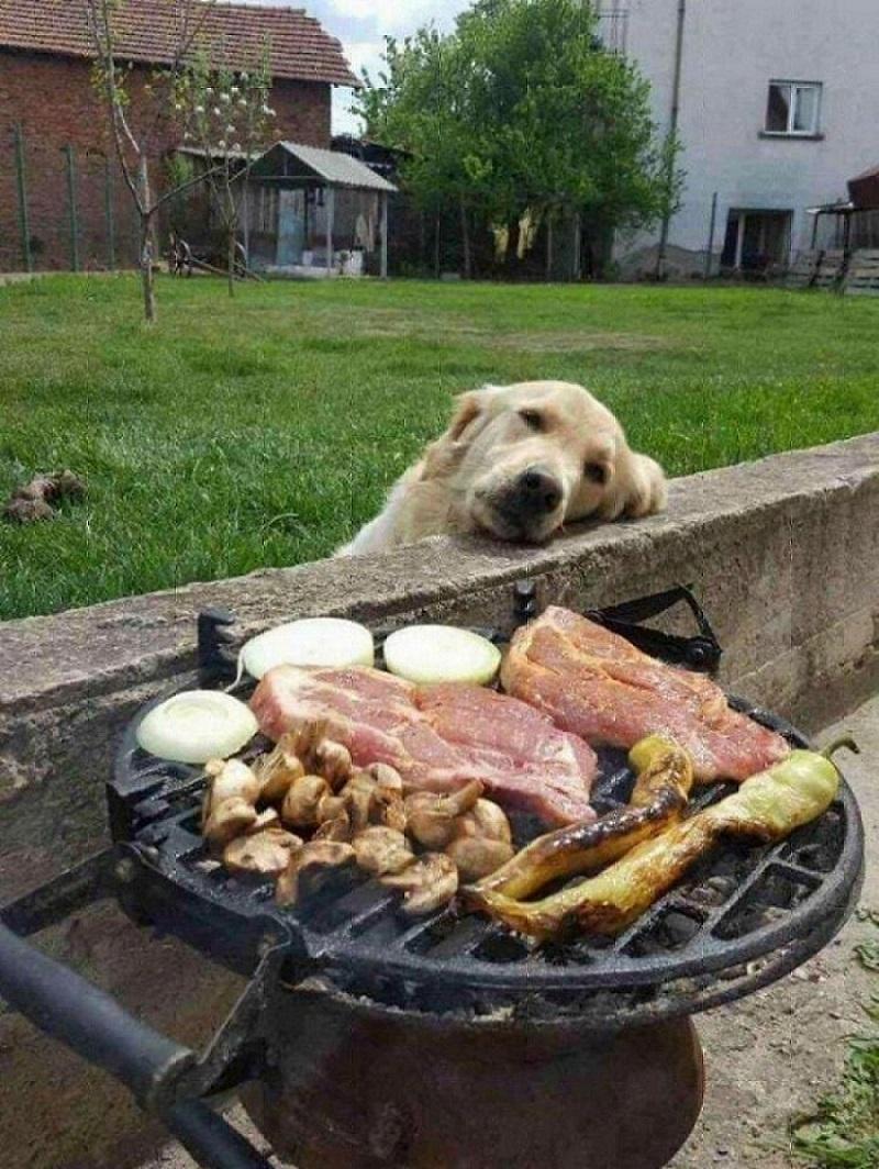 собака смотрит на мясо
