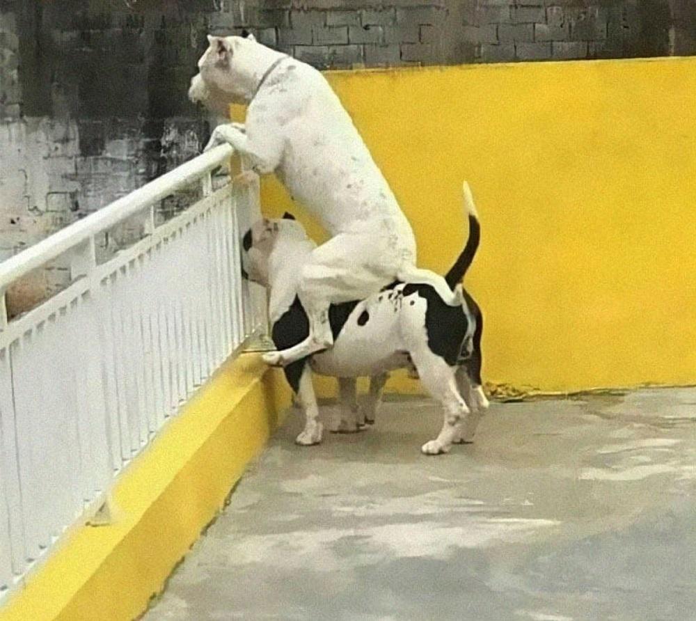 смешные собаки друг на друге