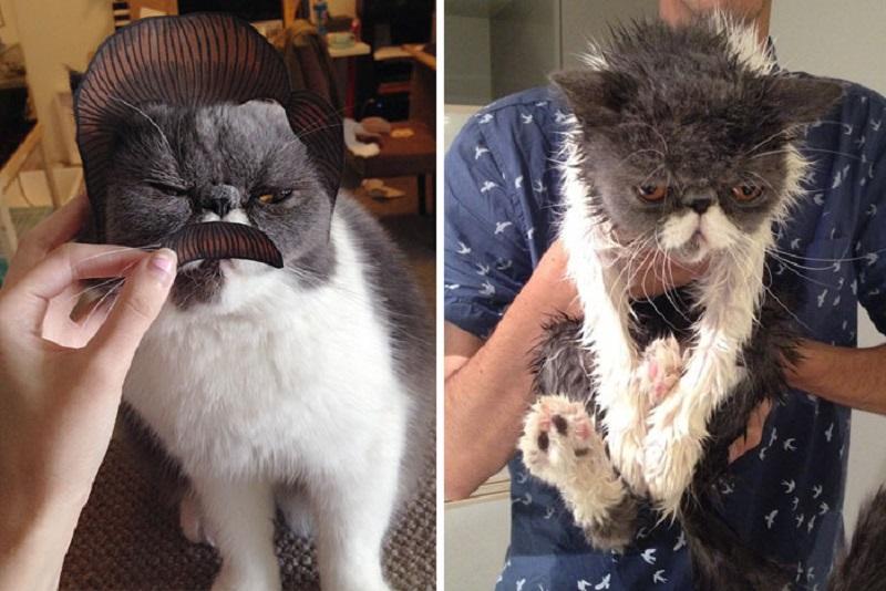 угрюмый кот после купания