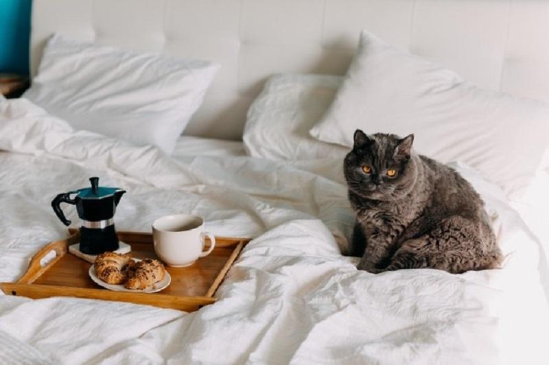 кошка в постели с едой