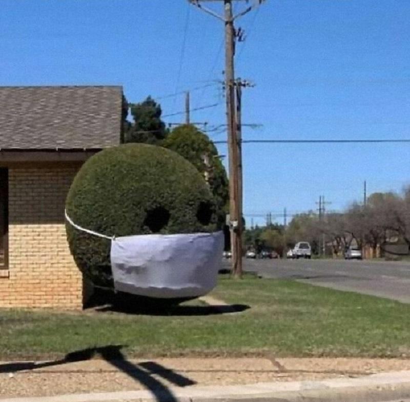 садовое дерево в маске
