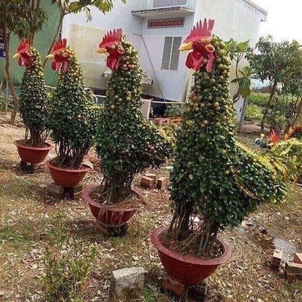 растения в форме кур