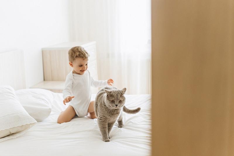 стресс у кота из-за ребенка