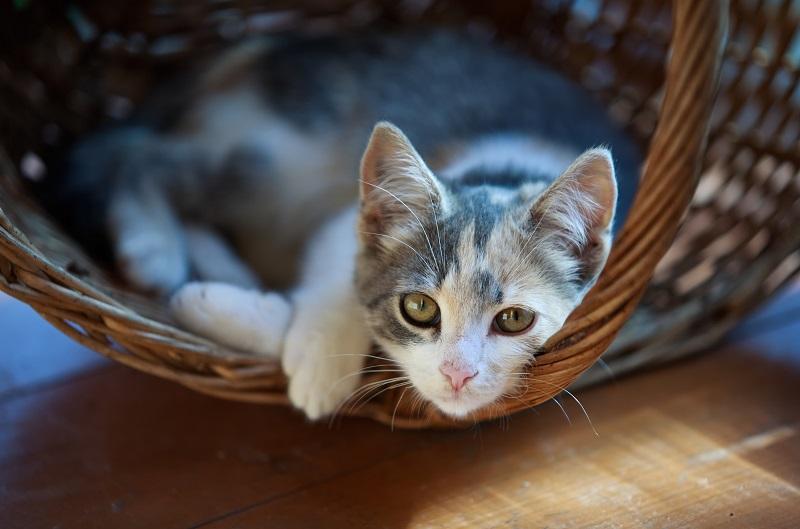 кот в лежанке