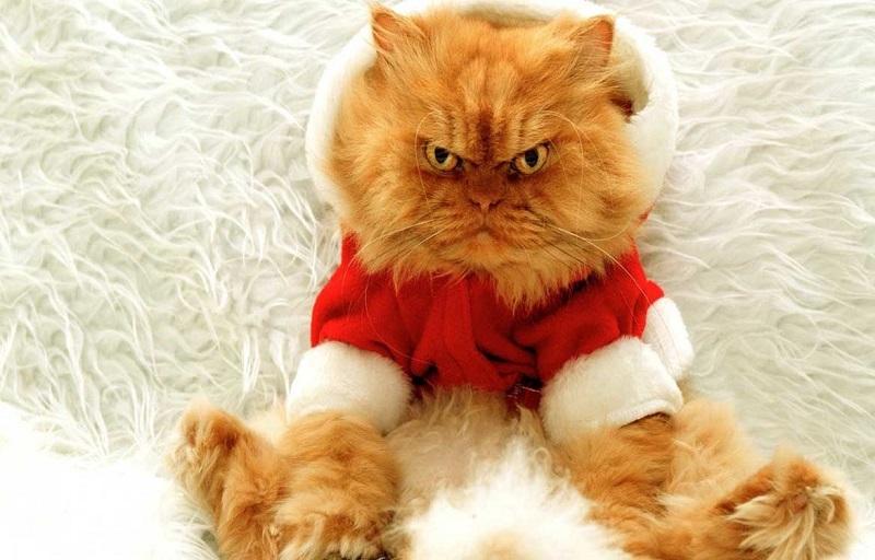 стресс у кота из-за одежды