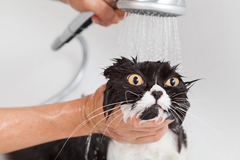стресс у кота из-за купания