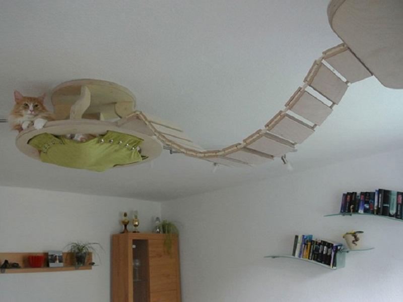 полка для кошки под потолком