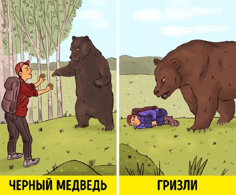 уроки выживания медведь