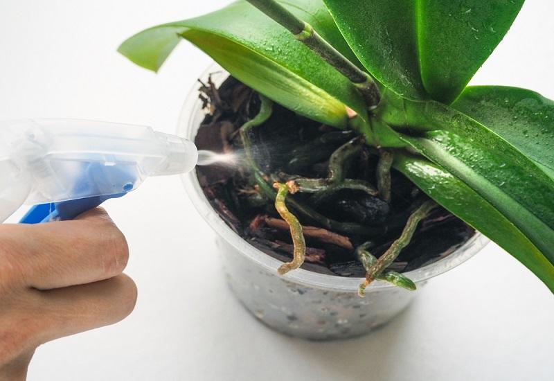 Витаминный коктейль для роста орхидей