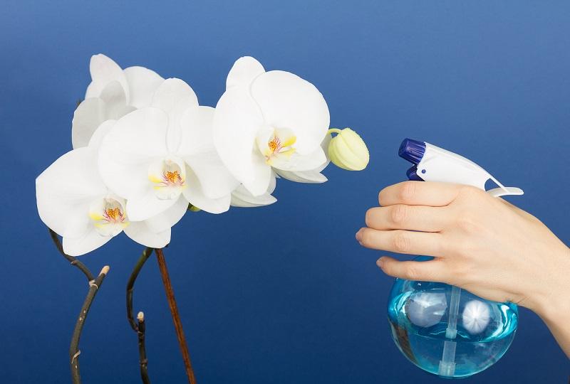 Витаминный коктейль для орхидей в спрее