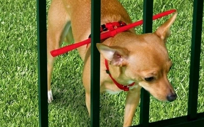 Владельцы животных борются с попытками сбежать