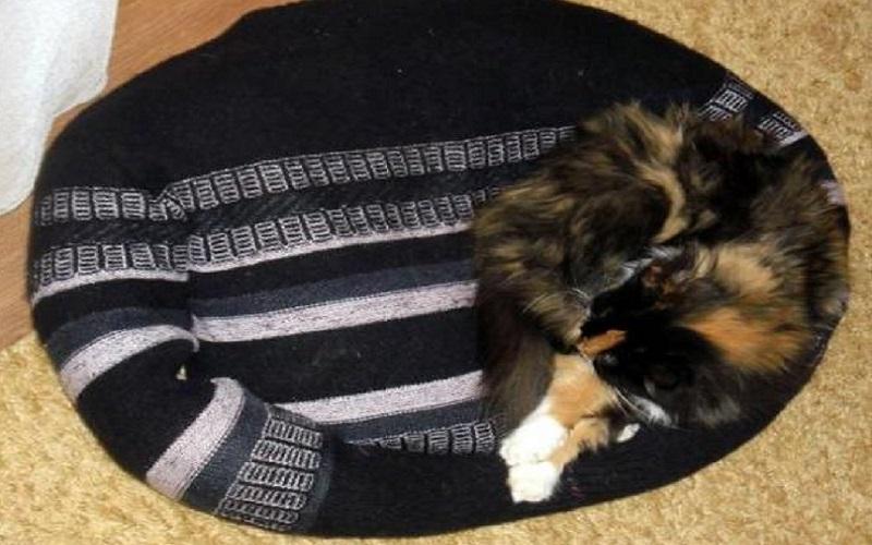 Владельцы животных делают лежанку из свитера