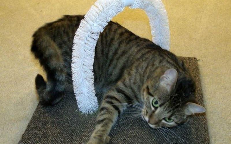 Чесалка для кошки