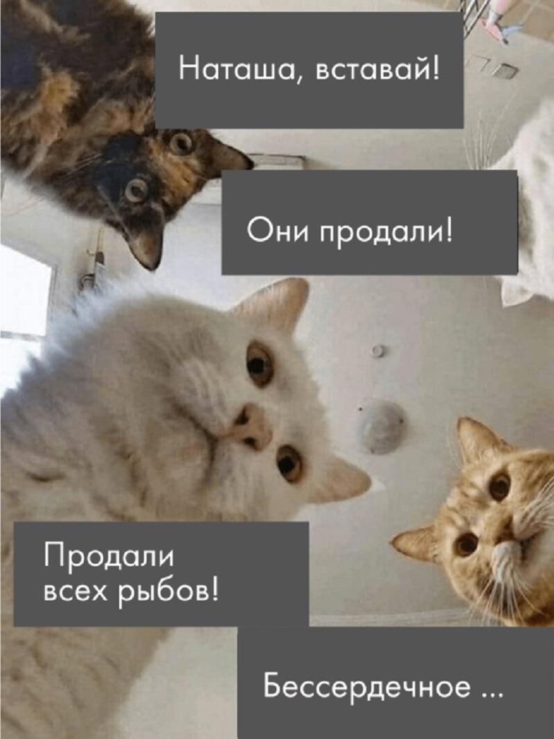 мем про рыбов наташа и коты