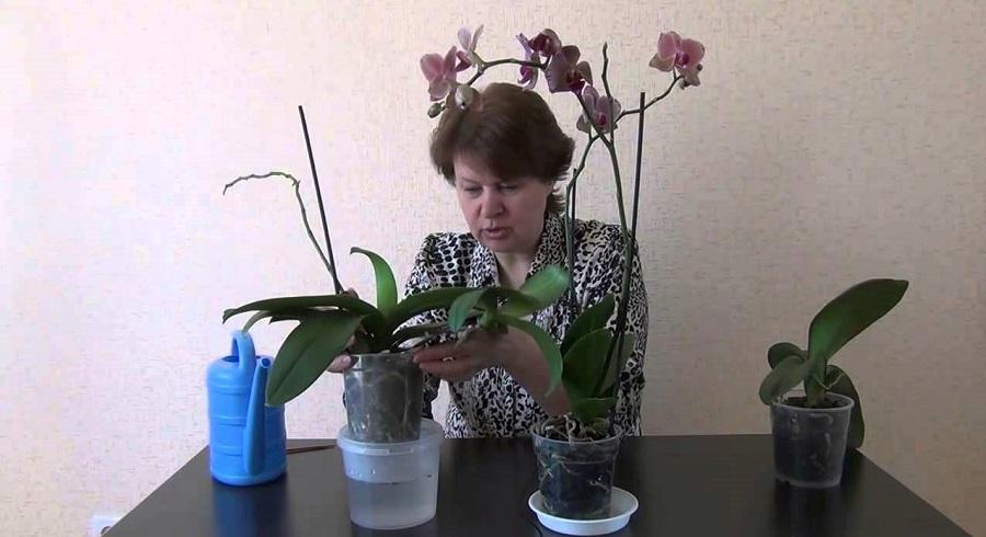 женщина выращивает орхидеи