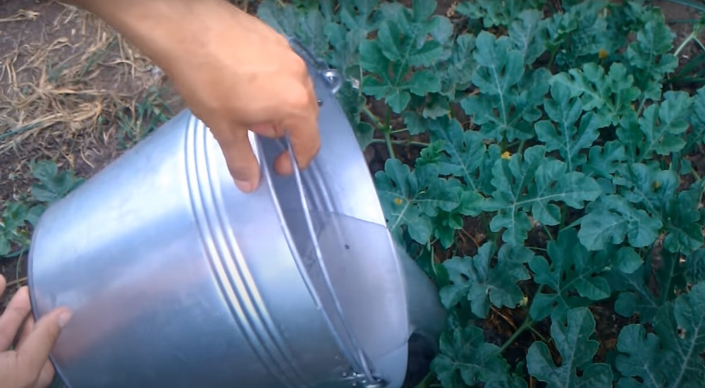 подкормка для арбузов