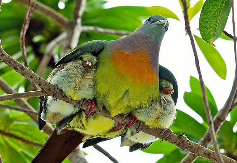 птица прячет потомство от дождя