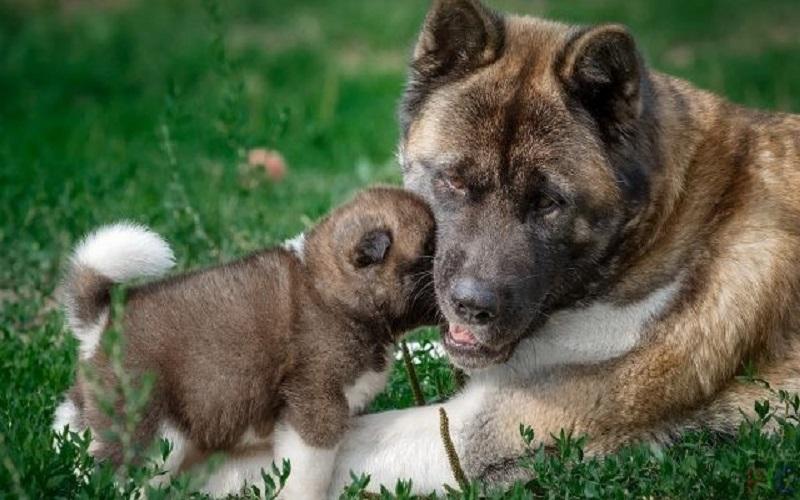 собака грает со щенком